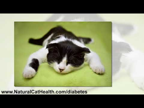 Diabetes Mellitus In Cats and Natural Solutions