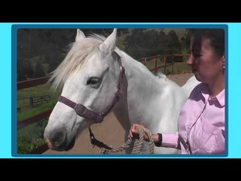Looking After Your Horse - Putting on Halters and Bridles