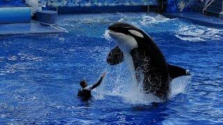 Se desploma Seaworld por maltrato a ballenas Orcas