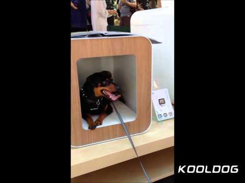 Modern Dog House / Kooldog House 2