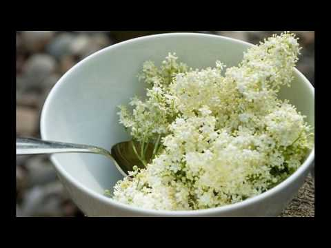 Elder Flower Herb Is Natural Treatment For Dry Hair Other Benefits How To Works