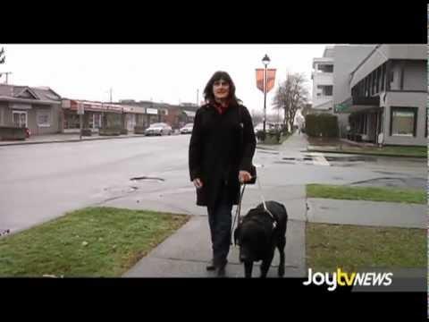 JoytvNews - Guide Dogs