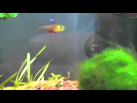 Fish Tank Updates & Bloopers!!! (11/23/11)