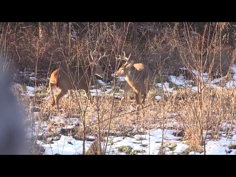 QDMA Whitetail Wednesday: Is QDM All About Trophy Antlers