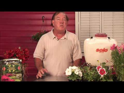 Flower & Plant Care : What Effect Does Temperature Have on Plants?
