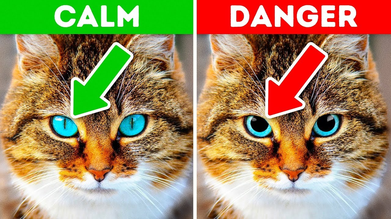 12 Signs Your Pet is Crying for Help