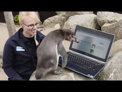 Lonely Penguin Tries to Find Love on 'Plenty of Fish' Dating Website