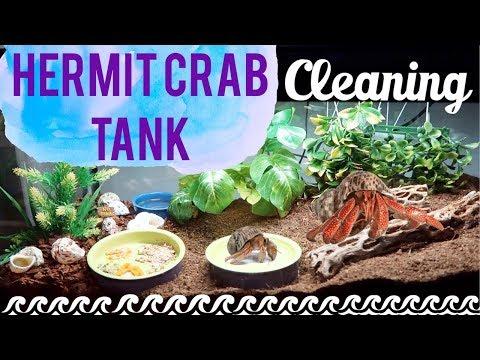 Hermit Crab Tank Setup & Tank Cleaning