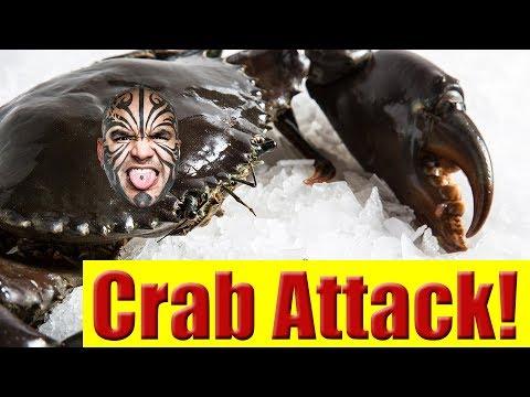 Getting Attacked By A Mud Crab While Cooking It Alive!