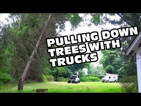 Dream House Build Ep 2 - Trucking Trees
