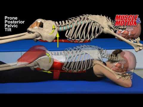 Yoga Anatomy & Core Stability