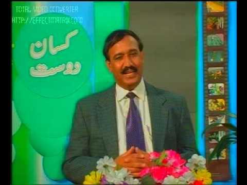 Curing Rheumatism in livestock Pakistan Dr.Ashraf Sahibzada