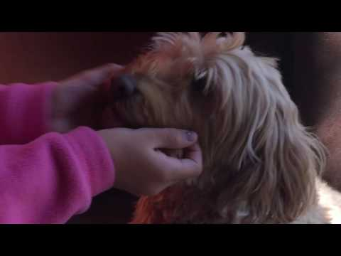 Dog Health By Examining Gums