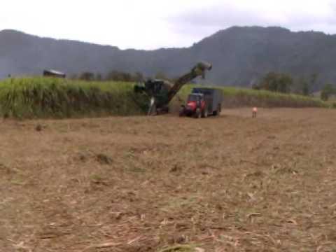 Harvesting  sugarcane at F.U.E.L S.E (Mauritius)