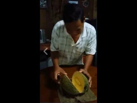 Awesome jackfruit from Cambodia tubeshared