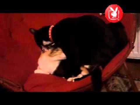 Xxx Mp4 Playboy TV Cats 3gp Sex