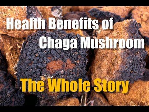 CHAGA MUSHROOM HEALTH BENEFITS - THE WHOLE STORY