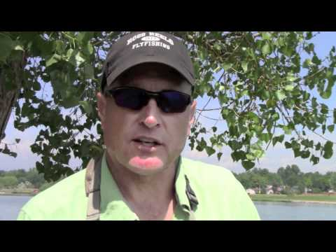 How to Fly Fish for Carp - with Barry Reynolds