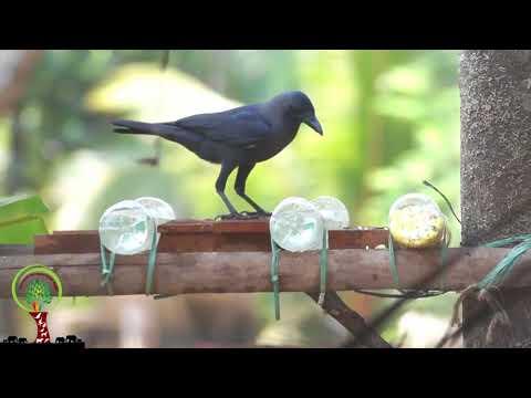 Save birds this summer 2018