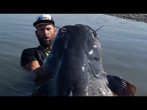 FIGHTING A BIG CATFISH  IN VERTICAL FISHING - HD by CATFISHING WORLD