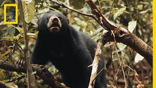 See Why This Little Sun Bear's World Is a Scary Place | Short Film Showcase