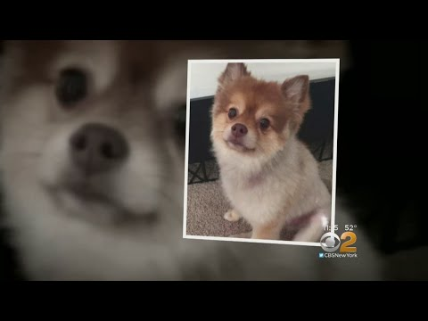 Dog Dies In Delta Air Lines' Care