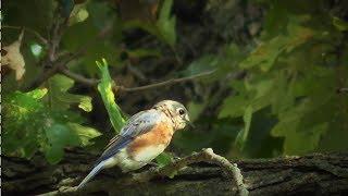 Videos für Katzen : Beschäftigte Vögel