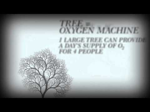 Trees: Best Bet To Fight Pollution