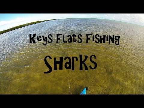 Key West Kayak Fishing - Flats Fishing Tips - Lemon Sharks