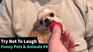 The Funniest Pet Animal Videos  - TRY NOT TO LAUGH 😂 #4