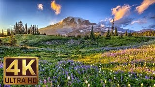 3 Hours Relaxing and Soothing Piano Music With the 4K images of Flower Fields - Part 11