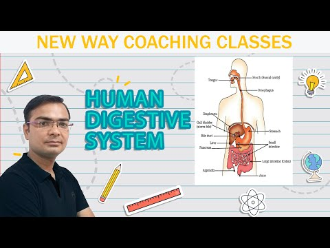 Easiest way to draw diagram of human digestive system.