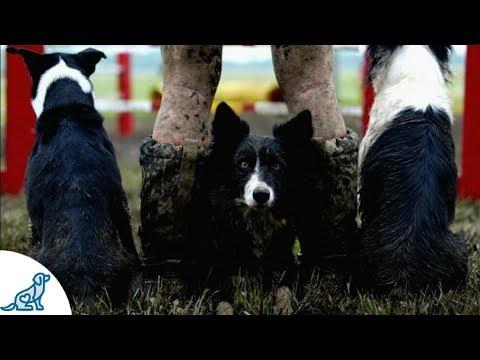 How Kayl McCann Began A Career In Dog Agility