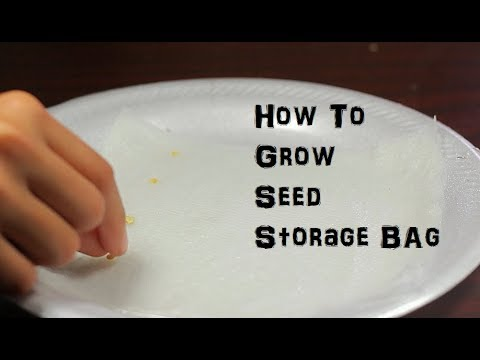 How to Grow A Seed in Storage Bag Fruit Flowers Plants ep. 3
