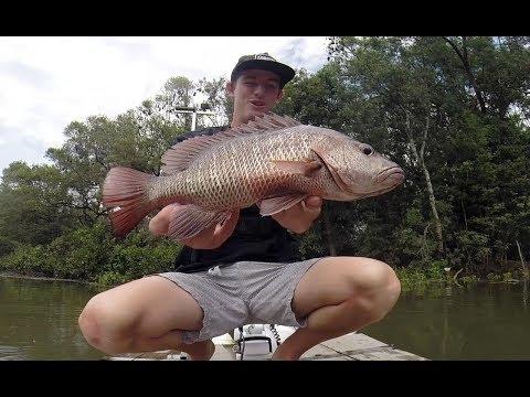 Let the Season Begin!! Mangrove Jack fishing