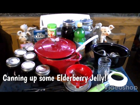 ~Canning Elderberry Jelly (Sure Jell Way!)~