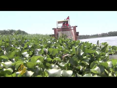 Kenya fights weed plague in Lake Victoria