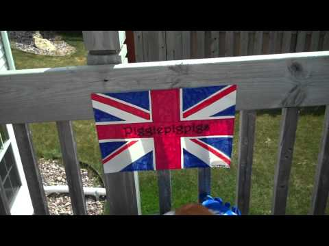 4000 Subscriber Entry Video for Piggiepigpigs - British Themed