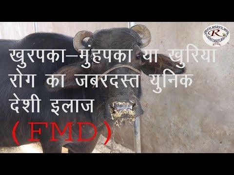 खुरपका मुंहपका या FMD रोग का बेहतरीन देसी इलाज, The best domestic treatment of FMD disease