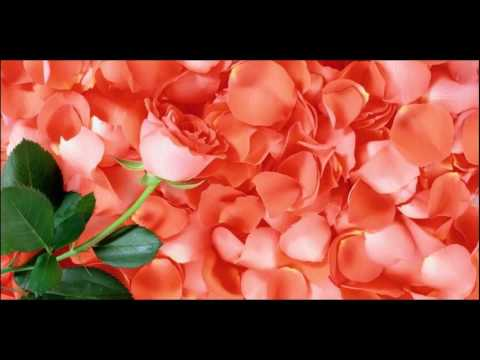 DIY Rosewater & Glycerin Spray How To Prepare And Use At Home