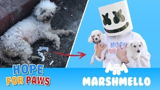 Marshmello Ft Hope For Paws  Happier Together Compilation