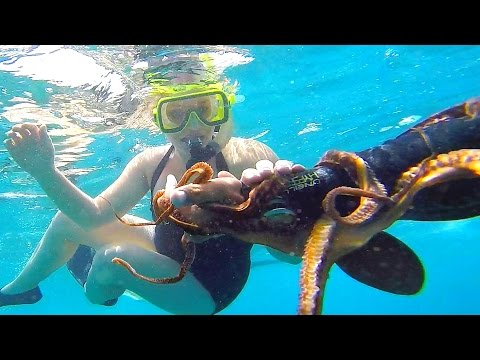SWIMMING WITH AN OCTOPUS IN HAWAII!