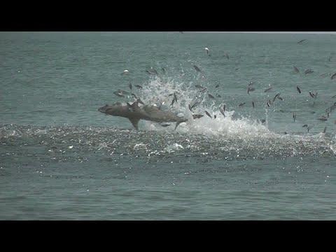 Myrtle Beach Shark Jump