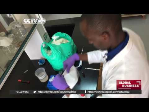 Ugandan scientists make bags out of cassava