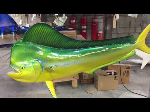 Mahi-Mahi Gray Taxidermy Fishmounts, Custom fish reproductions