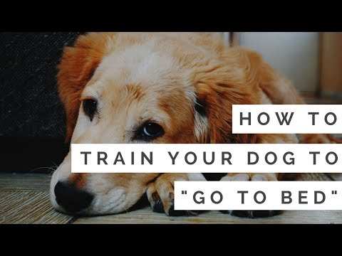 How to Train Your Dog to