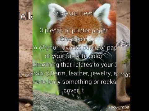 3 animal transformation spell