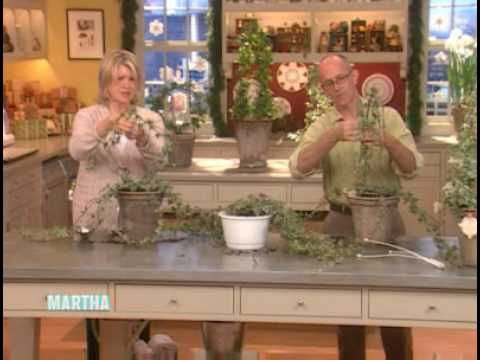 Ivy Topiaries ⎢Martha Stewart