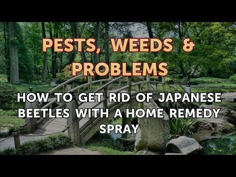 How to Get Rid of Japanese Beetles With a Home Remedy Spray