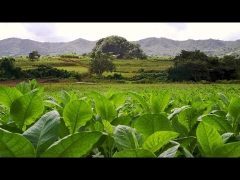 How U.S. tourism will impact Cuban tobacco industry (The Wonder List with Bill Weir)